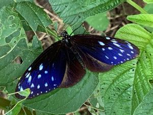 positiveimpact_butterfly