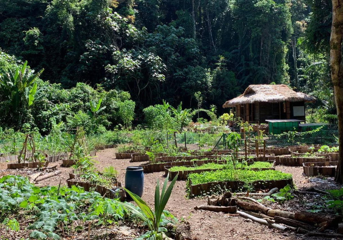 PERMACULTURE DESIGNED GARDENS